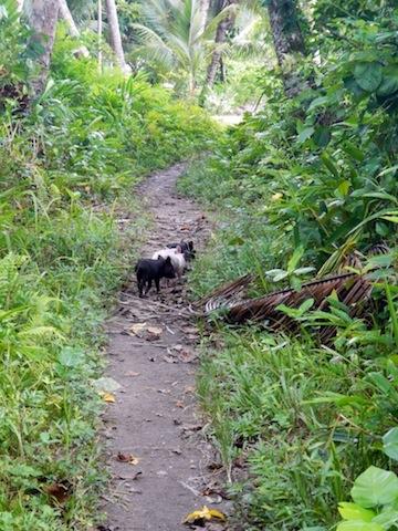 2014 MAR-SI-Nugu-Village Walk (23)